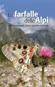 Farfalle delle Alpi